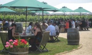 vineyard-48